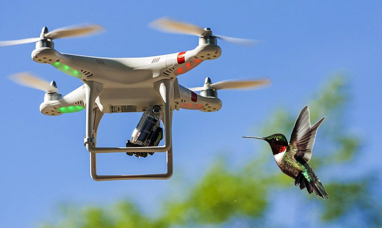 Vigilância em tempos de insegurança: sobre drones e beija-flores