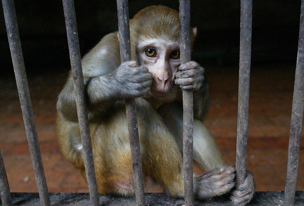 Cada macaco (que fique preso) em seu galho!