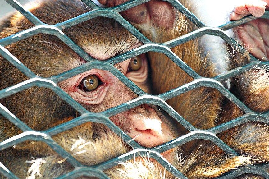Cada macaco (que fique preso) em seu galho! (Parte 2)