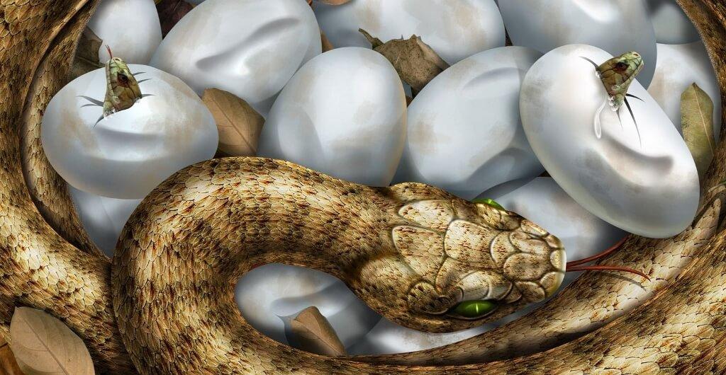 O ovo da serpente