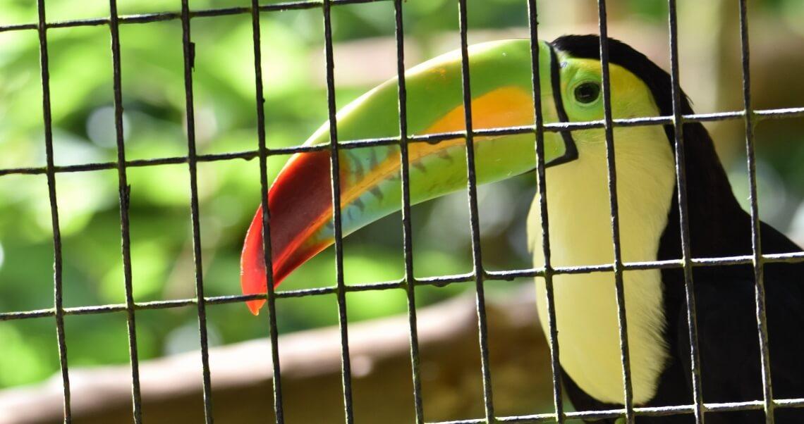 Tráfico internacional de animais e o relevante papel da Aduana brasileira
