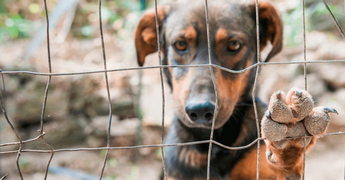 Maus-tratos aos animais: uma perspectiva criminológica