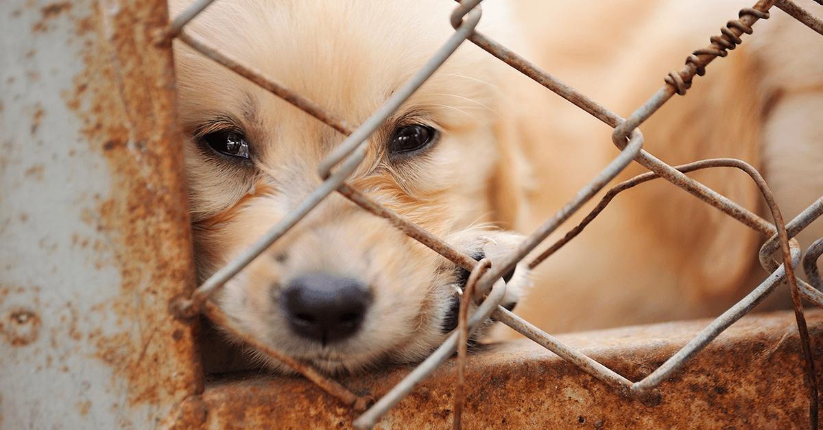 Inscrições abertas: Comissão Especial de Estudos de Direito Animal (2ª edição)