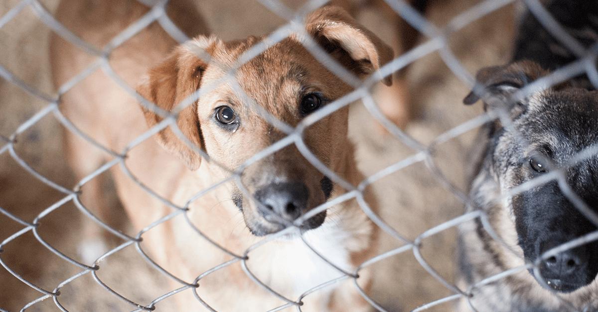 Extermínio de animais de rua não acontece só na Rússia