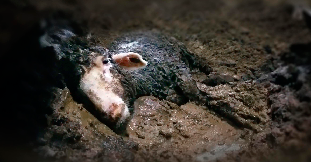 A exportação de animais vivos sob a perspectiva criminal