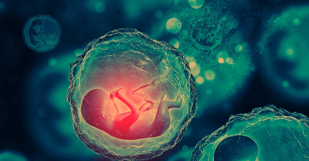 A quem pertence a vida no útero materno?