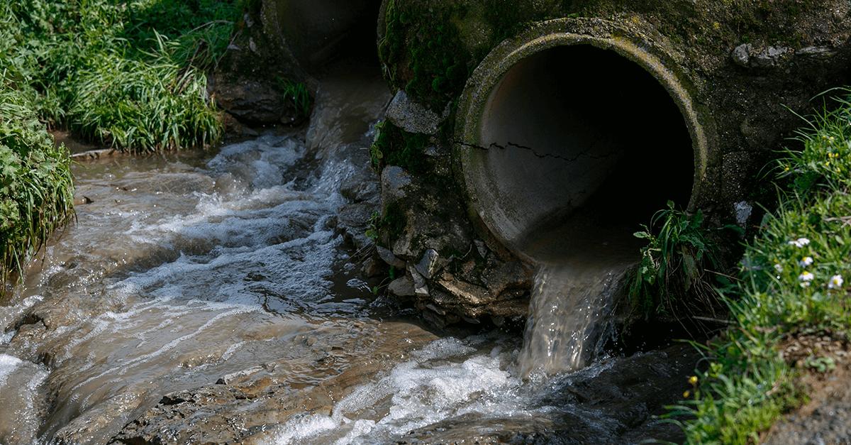 O princípio bagatelar nos crimes ambientais