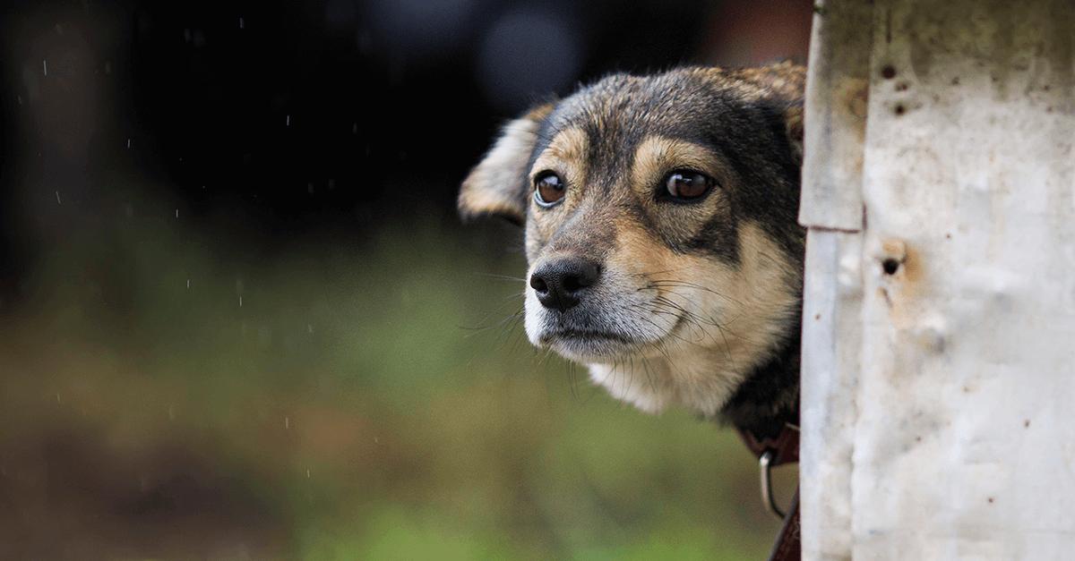 Resultado de imagem para maus tratos animais