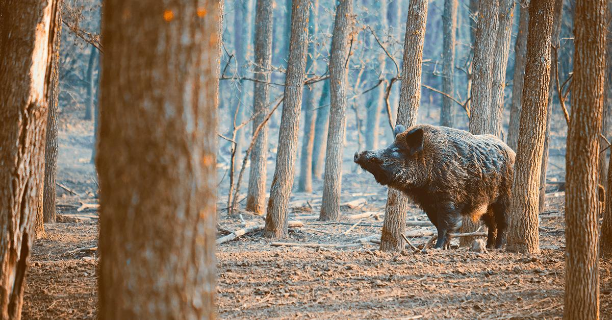 A liberação da caça: necessidade ou futilidade?