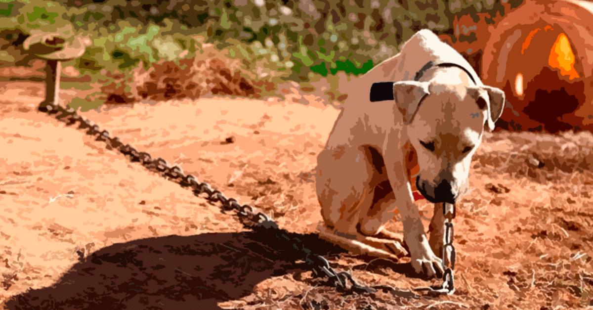 Animais acorrentados e confinados: até quando?