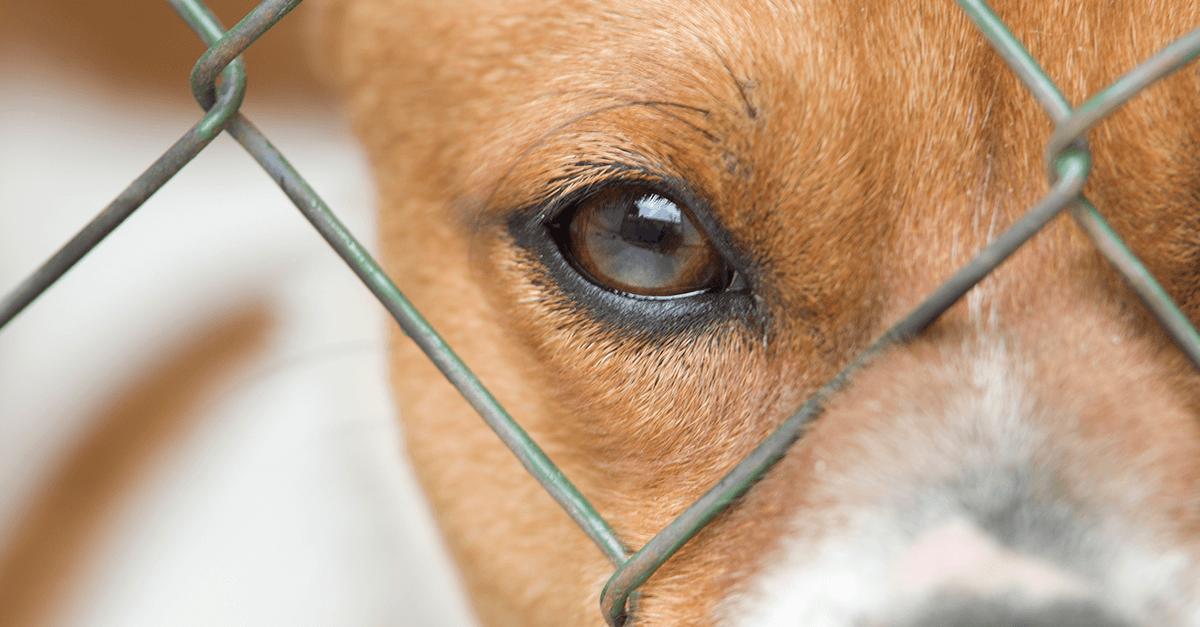 Direito Animal e Ciências Criminais