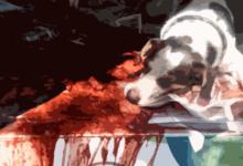 matar um cachorro