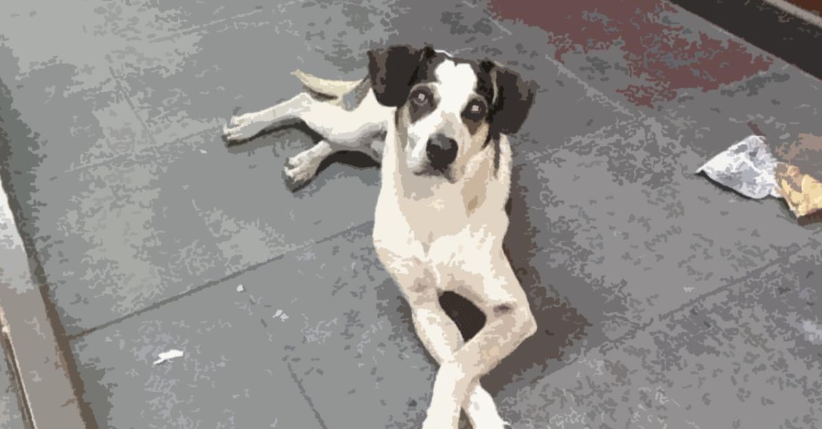Violência contra cadela: o caso Carrefour