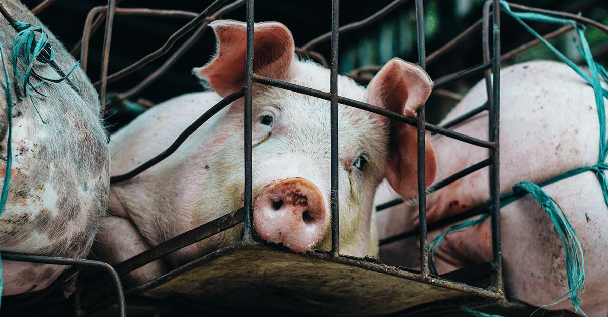 Maus-tratos aos animais: o que muda com o PL 470/2018