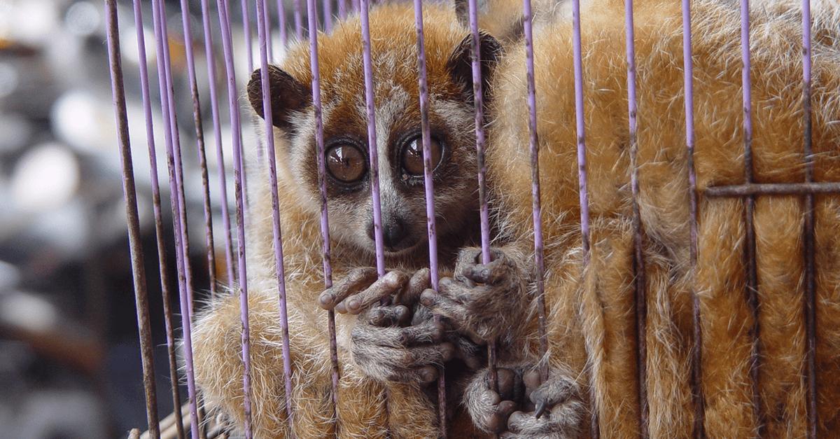 Comercialização de animais e maus-tratos
