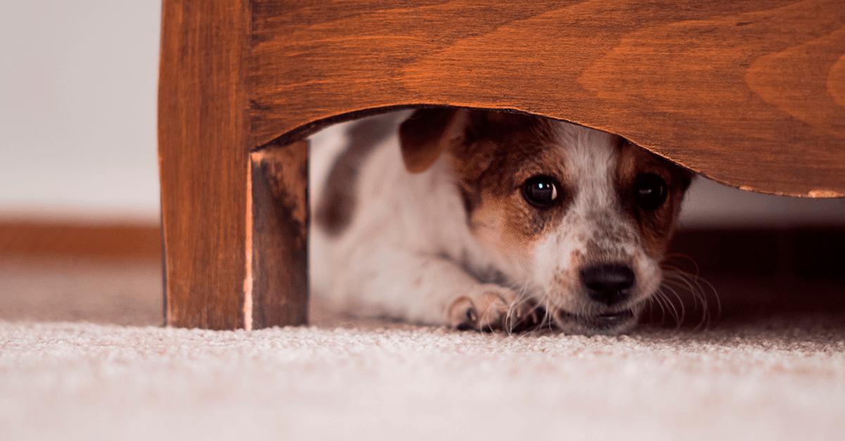Violência doméstica: os animais também são vítimas