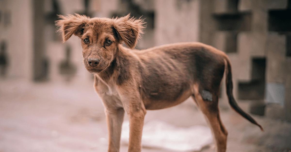 Projeto de lei estabelece pena de reclusão a quem praticar maus-tratos a animais