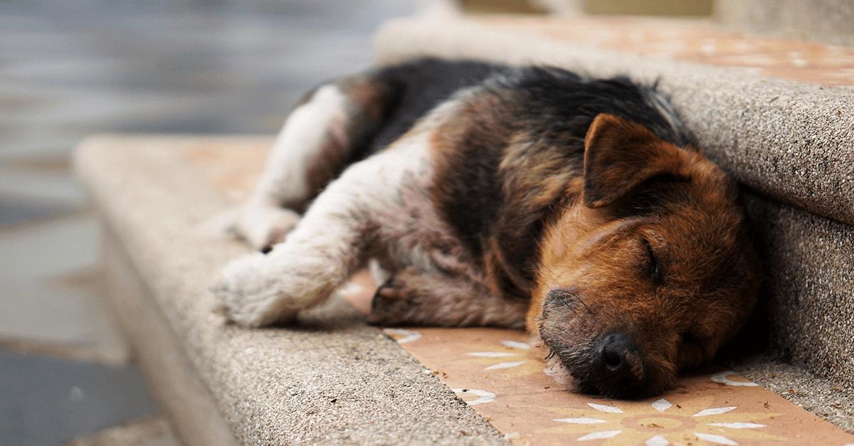 Maus-tratos a animais e negligência: possibilidade?