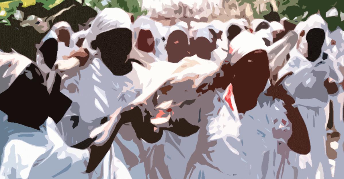 O STF e a constitucionalidade dos sacrifícios de animais em cultos de religiões de matriz africana