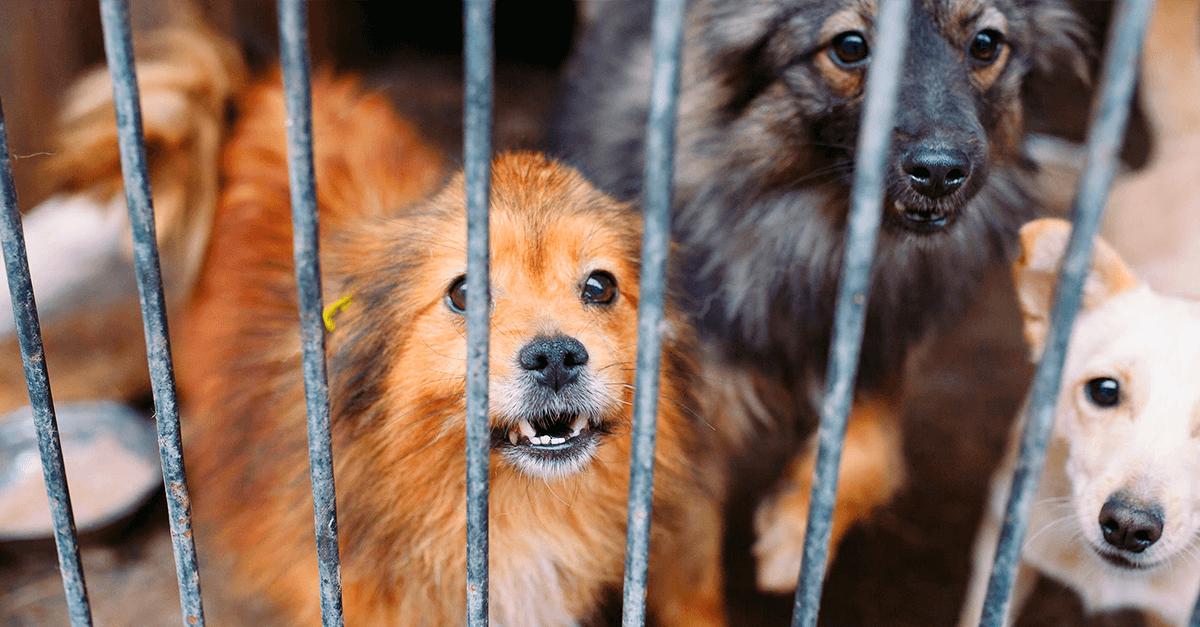 Reclusão como pena para quem maltrata animais?