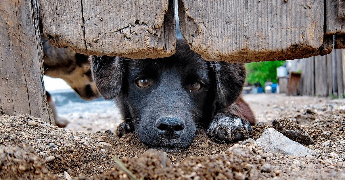 Projeto de lei torna inafiançável o crime de maus-tratos aos animais