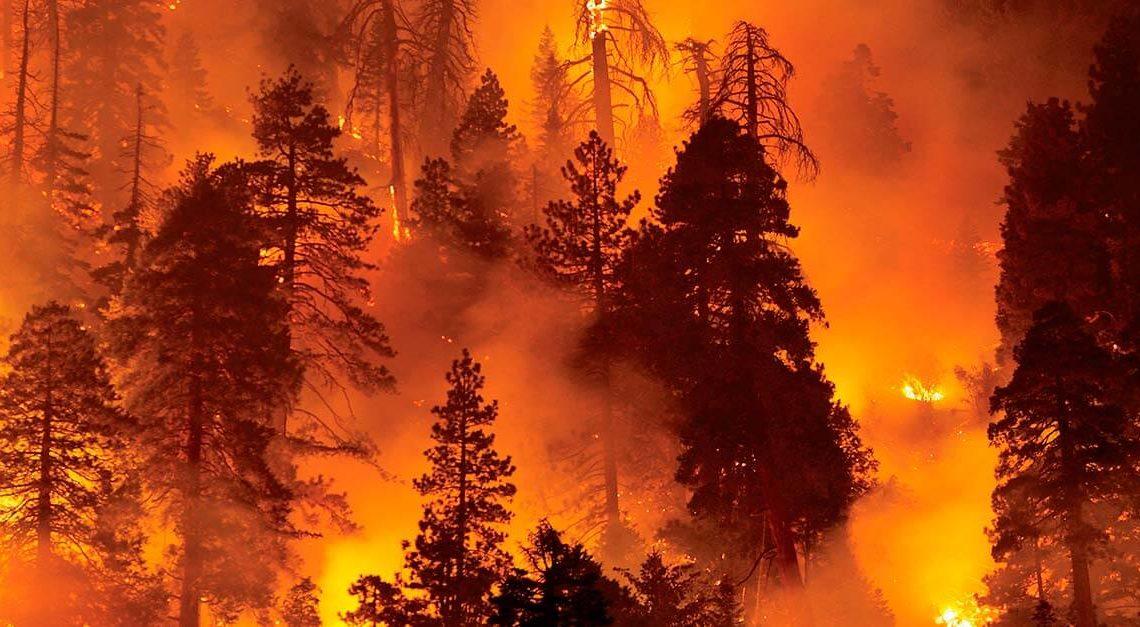 incendiários florestais