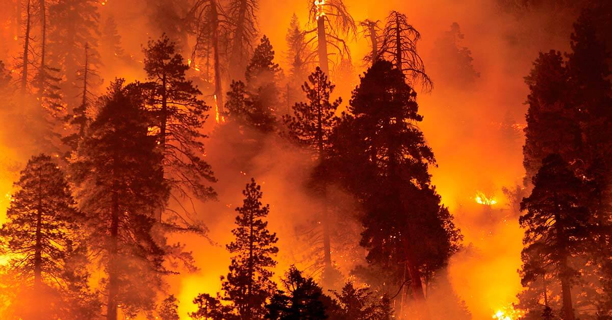 5 perfis de incendiários florestais