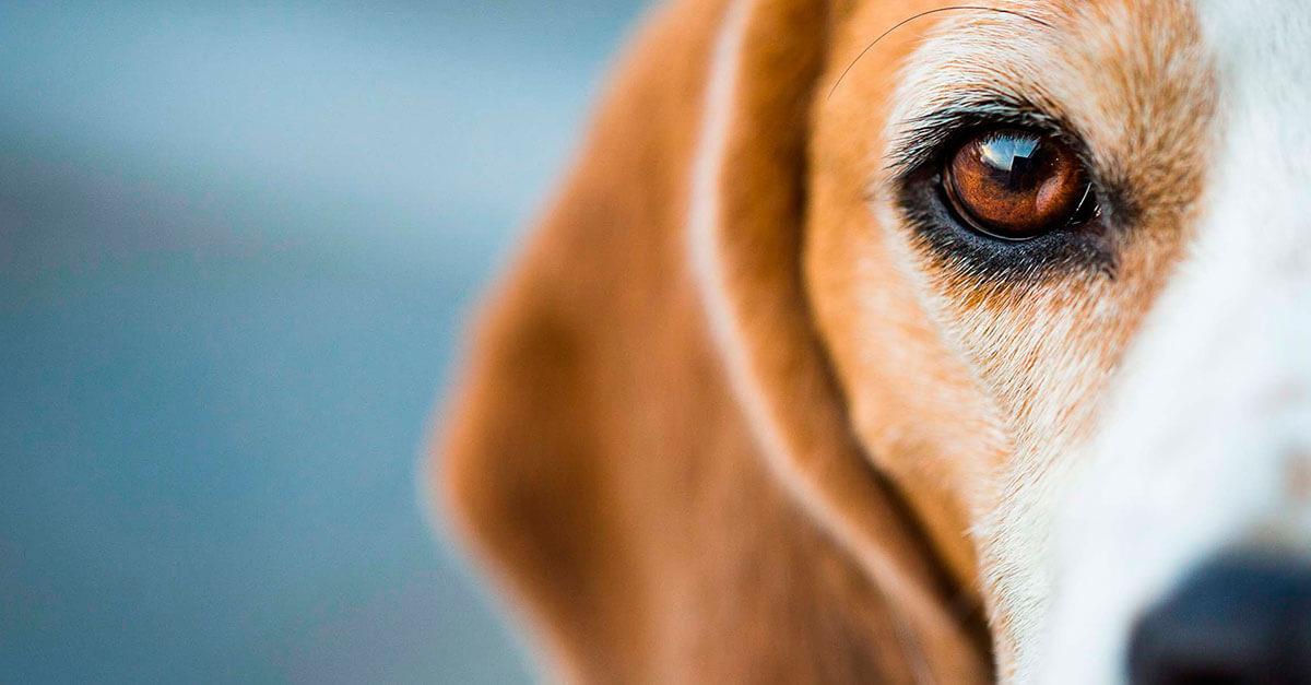 Projeto de lei que proíbe o tratamento de animais como coisas vai ao plenário do Senado