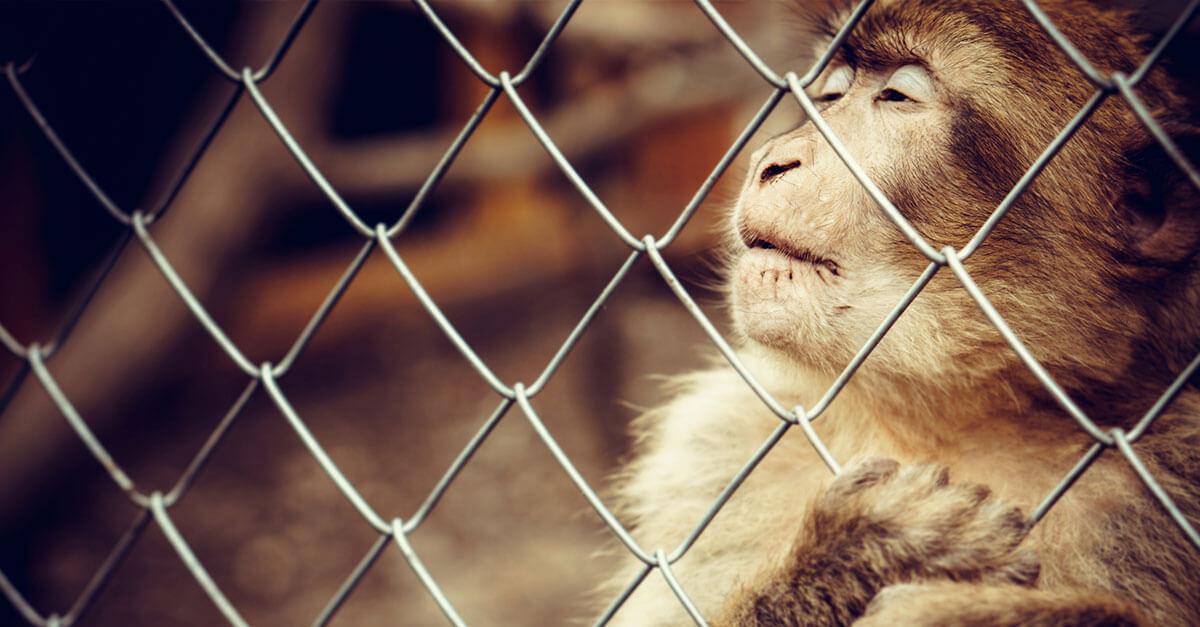PL 27/2018: um avanço pela metade na proteção aos animais