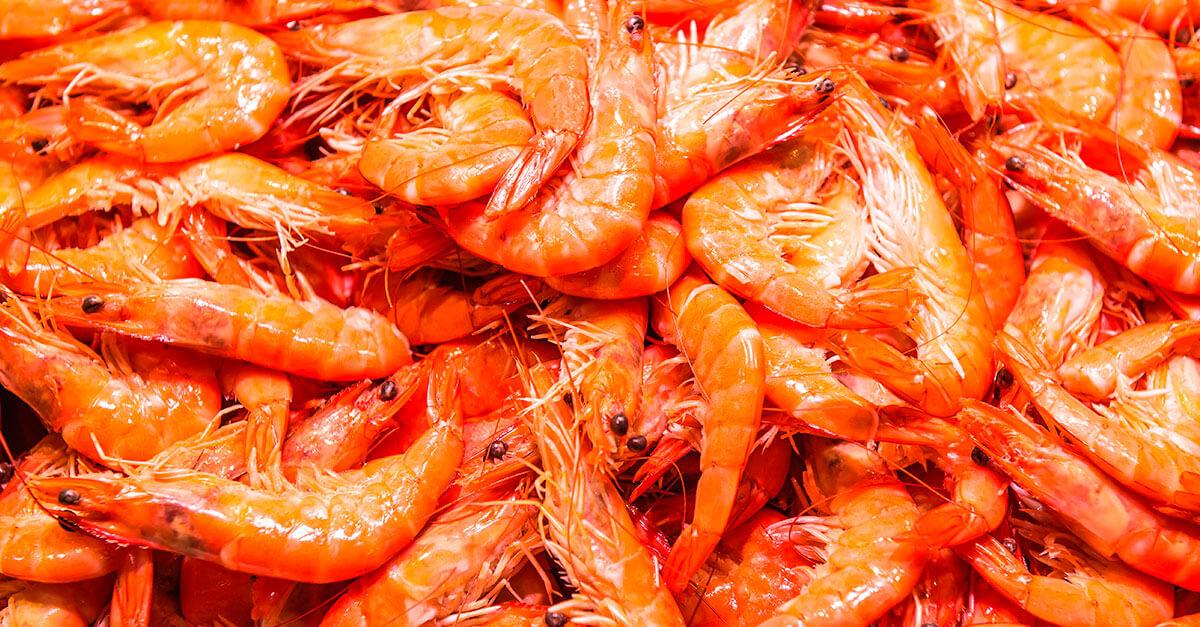 TRF4: homem é condenado por pesca ilegal de camarão
