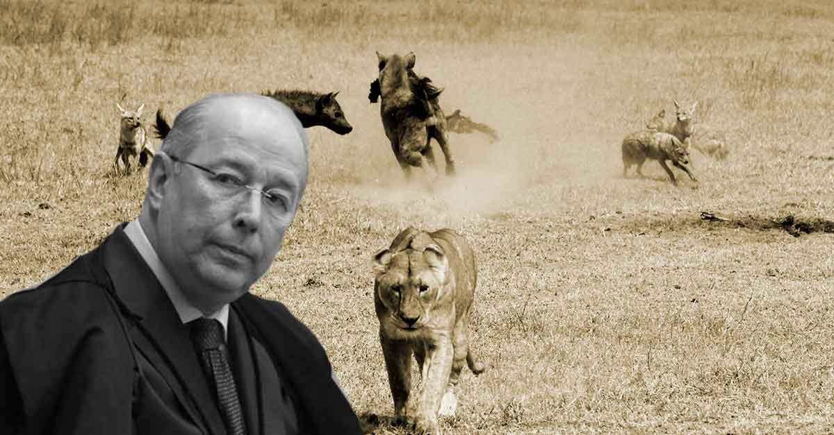 """Celso de Mello reage a vídeo que equipara o STF a uma """"hiena"""""""