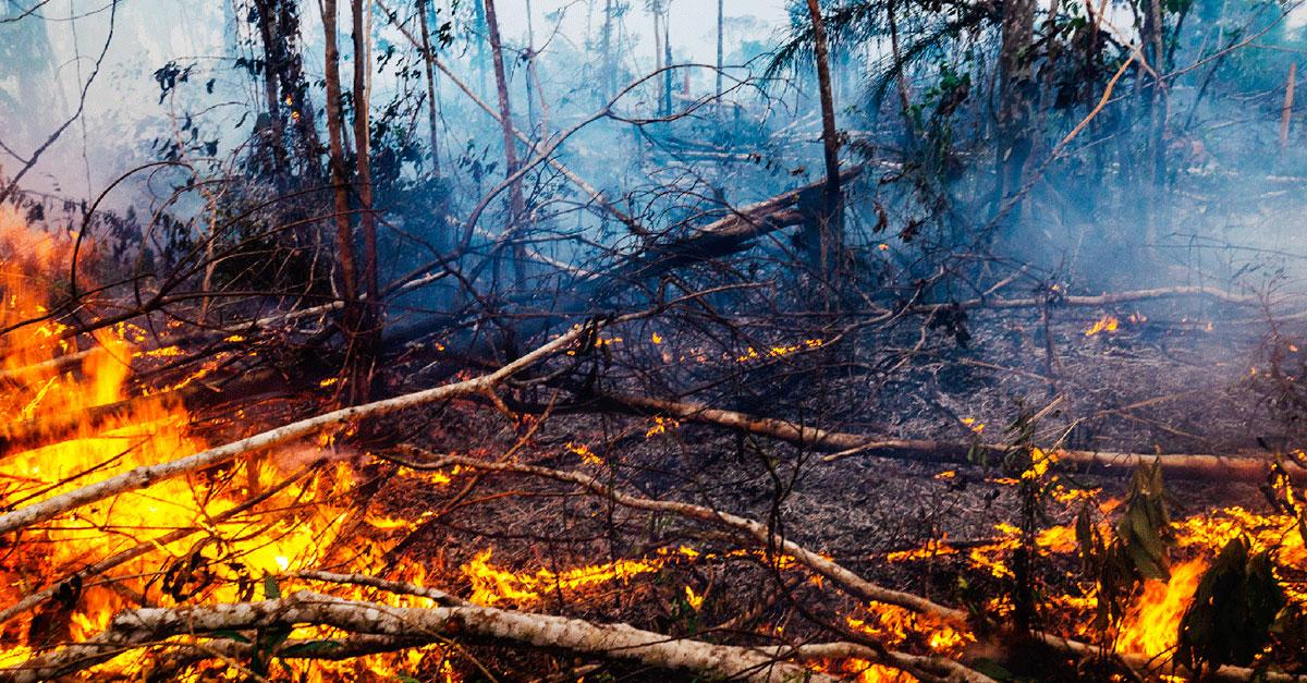 Sobre crime, deuses e árvores queimando