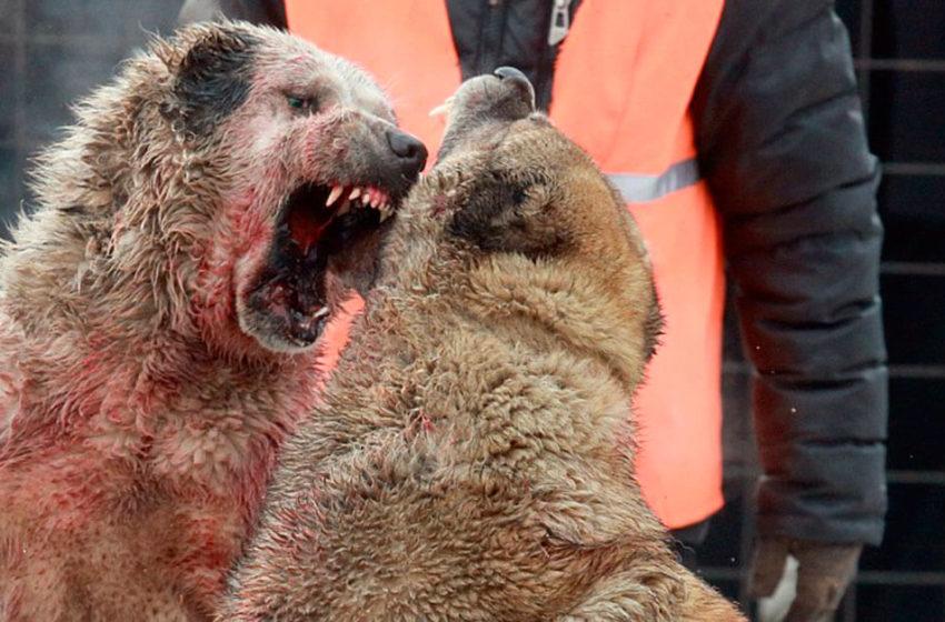 Rinha de cães: espetáculo de crueldade