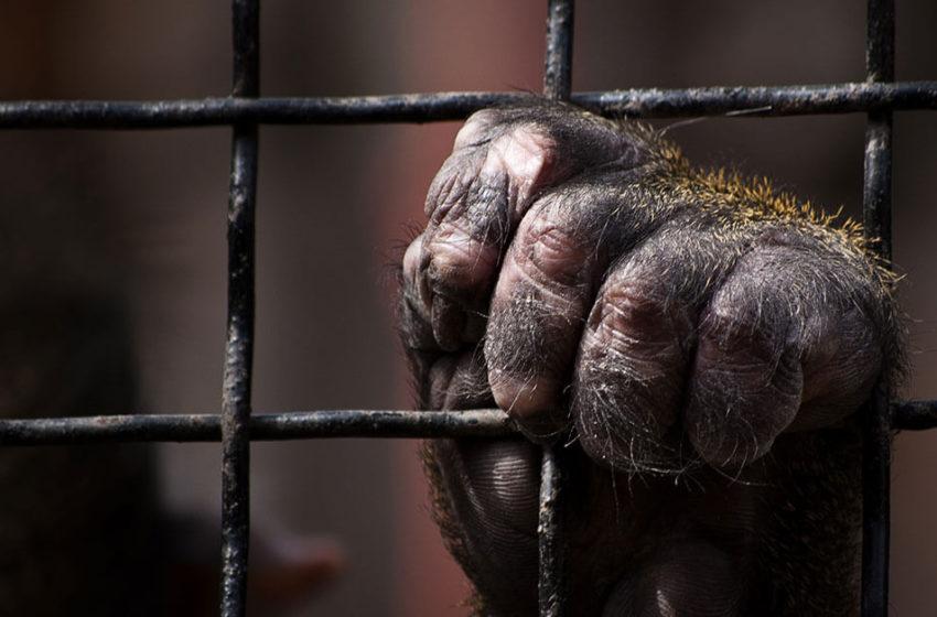 PL 27/2018: seres sencientes e a atipicidade do furto e roubo de animal doméstico