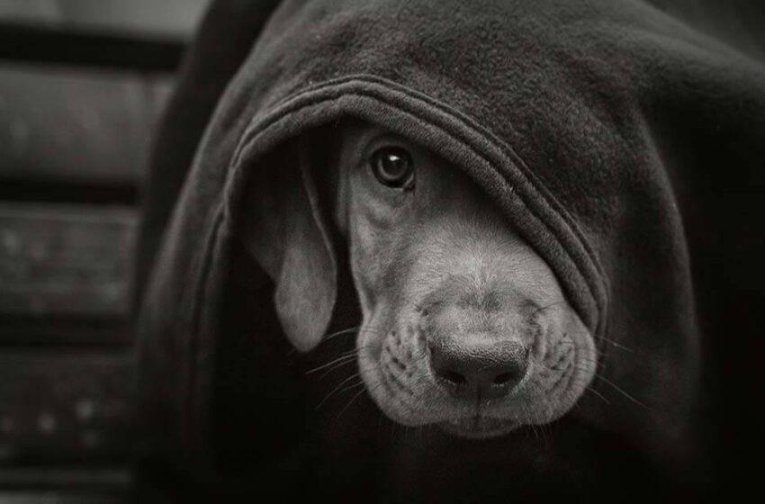 Animais não-humanos e vítimas domésticas