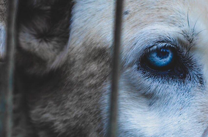 Estamos inaugurando a Criminologia Animal, você vem?