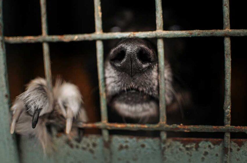 Por uma Criminologia Animal